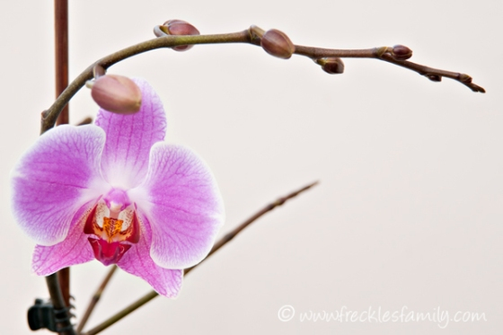 Orchid blog 2