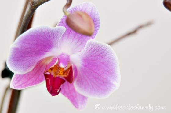 Orchid blog 3