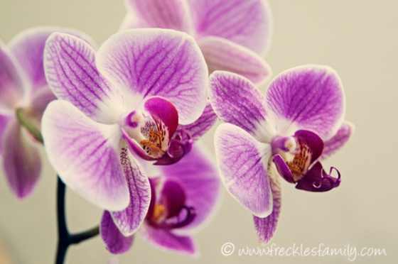 How to get an orchid to re-bloom