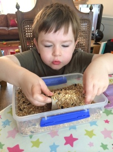 homemade bird feeder (1)
