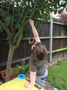 homemade bird feeder (2)